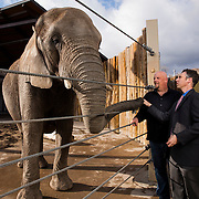Dr. Joshua Schiffman, right and Eric Peterson stand in front of the elephants at Hogle Zoo. Dr. Schiffman is doing cancer research on why elephant rarely get cancer. Eric Peterson is the elephant manager at Hogle Zoo in Salt Lake City,  Utah Thursday March 31, 2016. (August Miller)