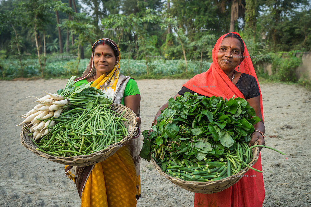 (L-R) Vegetable farmers Bindu Devi and Macho Devi, members of a Farmer's Producer Group, carry their vegetables in a basket to the local market in Machahi village, Muzaffarpur, Bihar, India on October 26th, 2016. Non-profit organisation Technoserve works with women vegetable farmers in Muzaffarpur, providing technical support in forward linkage, streamlining their business models and linking them directly to an international market through Electronic Trading Platforms. Photograph by Suzanne Lee for Technoserve