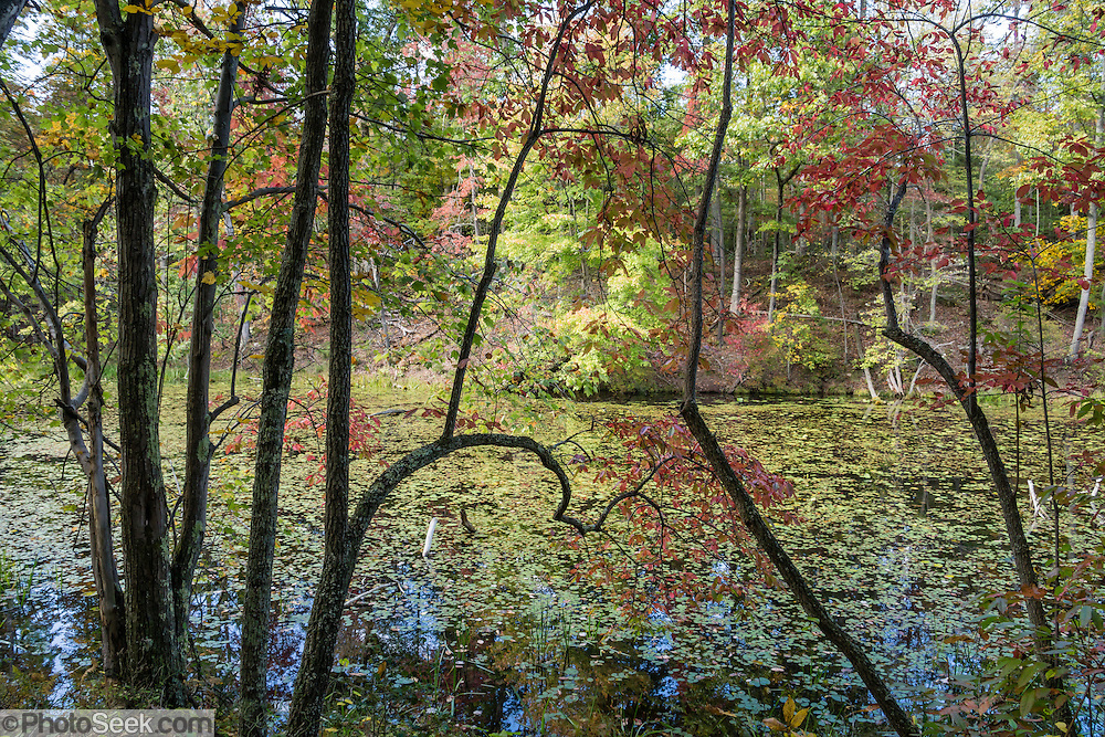 Autumn foliage colors reflect in Bays Mountain Reservoir. Bays Mountain Park & Planetarium is an attractive nature preserve in Kingsport, Tennessee, USA. Enjoy walking a 2.3-mile loop (and other trails) around the old city reservoir which provided water 1917-1944 and now serves as lake habitat. Bays Mountain Park is the largest city-owned park in Tennessee and was declared a State Natural Area in 1973. As part of the Ridge-and-Valley Appalachians, the ridge of Bays Mountain runs southwest to northeast, from just south of Knoxville to Kingsport, in eastern Tennessee.
