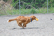 Ryder loves to play and have fun and run around enjoying life.
