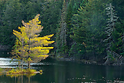 Tree and Mew Lake<br /> Algonquin Provincial Park<br /> Ontario<br /> Canada