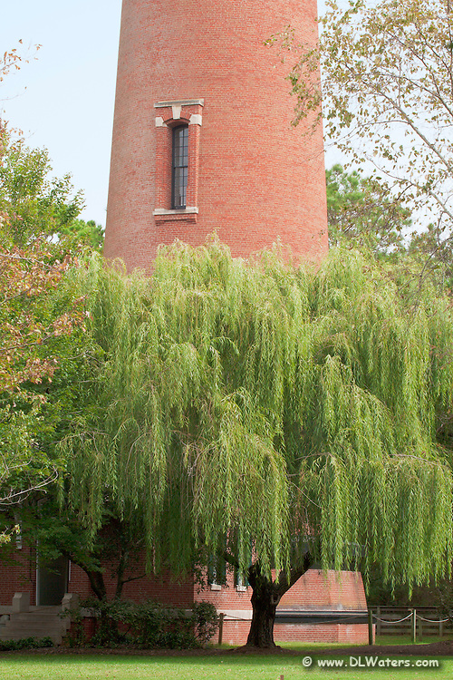 Currituck Lighthouse and Willow tree.