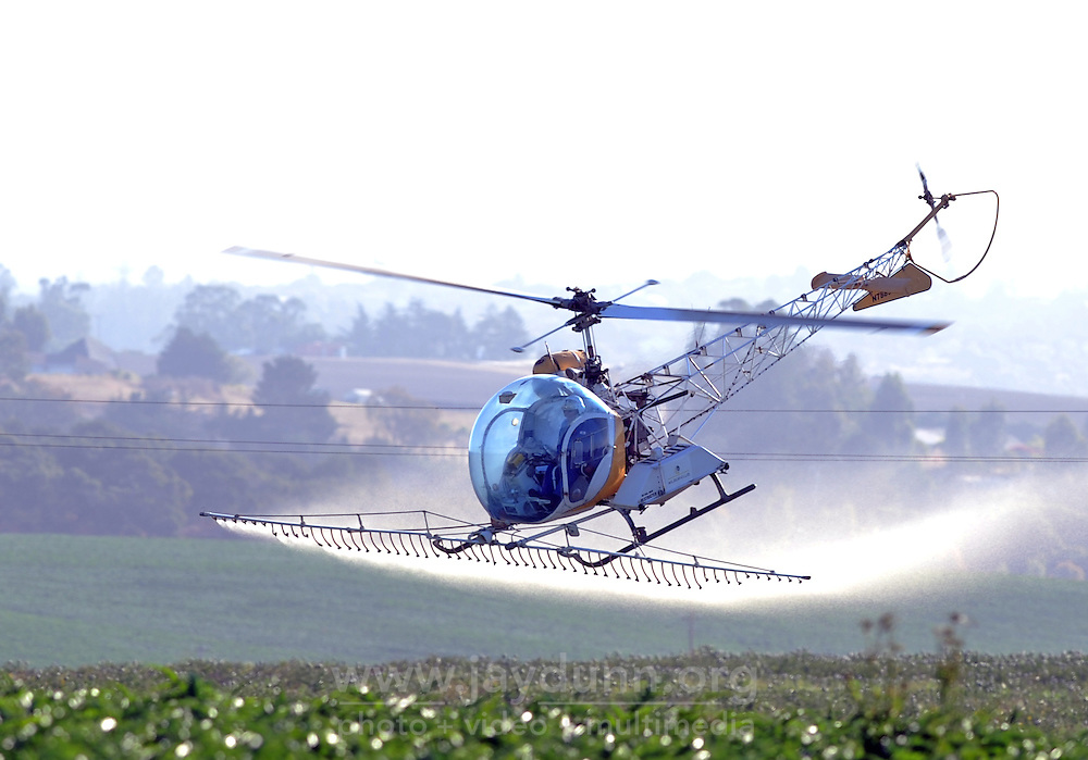 At work early Sunday morning, a crop-spraying helicopter comes in low for a run over artichoke fields in Castroville.