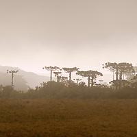 Campos de altitude no Parque Nacional dos Aparados da Serra, Rio Grande do Sul, Brasil, 16/09/2004 foto de Ze Paiva/Vista Imagens