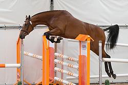 074 - Endelin<br /> KWPN Paardendagen - Ermelo 2012<br /> © Dirk Caremans