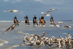 Strandwandeling, Le Jeune Philippe, Van Steen Kris<br /> Stal Lejeune - Oostduinkerke 2019<br /> © Hippo Foto - Dirk Caremans<br /> 29/11/2019