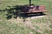 bench under tree with cut and dried grass