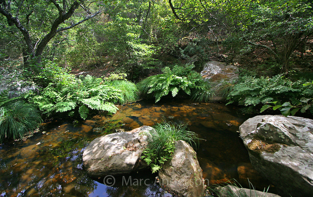 A quiet stream in the Parque Natural de Los Alcornocales cork forest, Andalucia,  Spain.