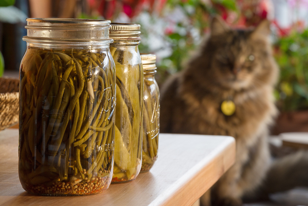 Jars of pickled green beans, also known as dilly beans, with a cat in the background.