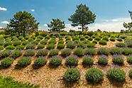 20170727 Lavender Garden