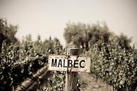 Malbec grape vines at Finca La Heredad in the Luján de Cuyo area of Mendoza, Argentina. The farm's vines surround the boutique hotel Club Tapiz.