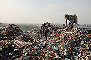 New Delhi, India - <br /> <br /> Garbage Mountain<br /> <br /> Just a few miles from the famous Akshardham temple, where tourists flock to see the structure's sandstone and marble work, the 29-hectare, slum-surrounded Ghazipur landfill in east Delhi seems a world apart. Each day hundreds of mainly migrant workers earn a meager living at the landfill by collecting recyclable material like plastic, metal and even hair to sell. The dump is the last port of call for Delhi's trash, having already been picked through by other waste collectors who collect bags of garbage directly from homes. Delhi is home to three landfills where around 6,000 tons of trash is dumped daily. Studies have shown that living near a landfill increases the risk of cancer, birth defects and asthma.<br /> <br /> Photo shows: QASIM ALI, a native of West Bengal, has been working at Ghazipur landfill for the past twelve years. He came to the capital with the hopes of finding a job. Unable to find employment, and perhaps unable to speak the local language, he eventually turned to ragpicking, gathering trash at the dump to sell as recyclables.<br /> &copy;Chinky Shukla/Exclusivepix Media