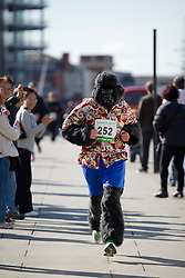 © Licensed to London News Pictures. 22/09/2012. LONDON, UK. A runners wearing a gorilla costume is seen running past members of the public on London Bridge as they take part in the 2012 Great Gorilla Run in London today (22/09/12). Now in its 10th year, the annual event sees hundreds of competitors take part in a 7km fun-run dressed as gorillas to raise money for mountain gorilla conservation projects in Africa. Photo credit: Matt Cetti-Roberts/LNP