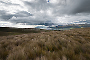 Paramo grassland high up in the Andes mountains of Ecuador, South America.