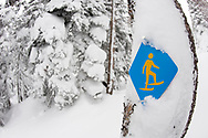 Side view of a blue and yellow snowshoe trail sign nailed to a tree in the forest after a snowstorm in Bend, Oregon.