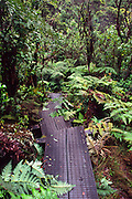 Alakai Swamp Trail, Kokee, Kauai, Hawaii<br />