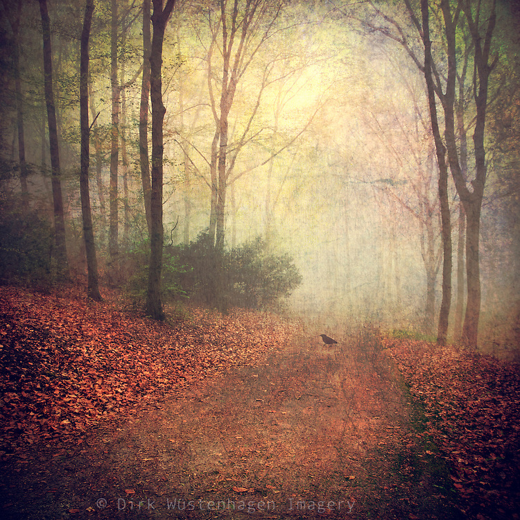 Forest shrouded in fog with a bird psitting on the ground.<br /> <br /> Prints &amp; more:<br /> http://society6.com/product/Fall-Legends_Print