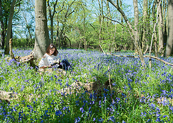 MAIDENS GREEN - UK  - 8th May 2016: <br /> Bluebell wood in the Spring sunshine. Iona Jones, a local resident uses the hot weather to revise for upcoming exams and reads a book in her local bluebell wood.<br /> <br /> Photograph by  Ian Jones