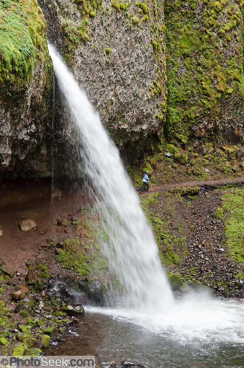 Hikers can walk behind and beneath Upper Horsetail (Ponytail) Falls (~100 foot plunge), a one-mile round trip stroll along Horsetail Creek, in Columbia River Gorge National Scenic Area, Oregon, USA.