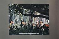 Photo magnet with flowering cactus garden, flowers, trees, desert, garden photography, Santa Monica, California, home art, fridge art, Los Angles, Southern CA.