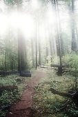 Oregon Woods