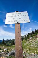 Paradise Park area of Mt. Rainier National Park, WA.