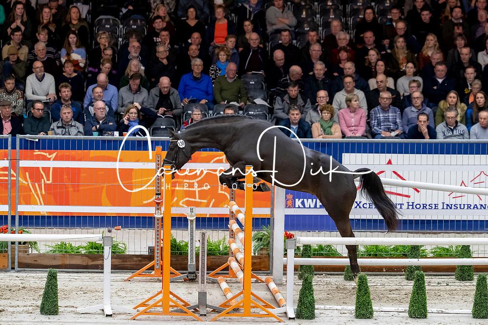 138, Metallic Key SR<br /> KWPN hengstenkeuring - 's Hertogenbosch 2020<br /> © Hippo Foto - Dirk Caremans<br />  30/01/2020