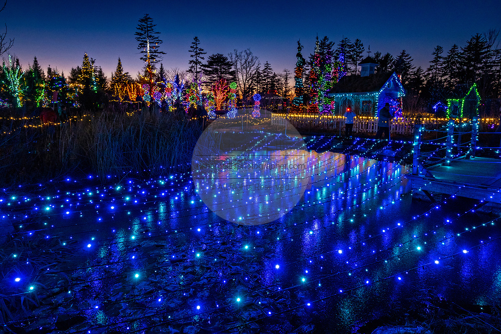 Thousands of fairy lights decorate the winter landscape during the Gardens Aglow festival at the Maine Coastal Botanical Gardens in Boothbay Harbor, Maine. The largest botanical garden in New England uses over 650,000 lights to transformation the frozen gardens into an extravaganza of festive lights and brilliant color.