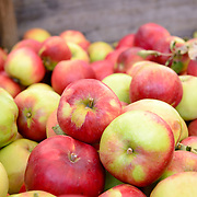 Apples for sale at Hobart's Salamanca Market
