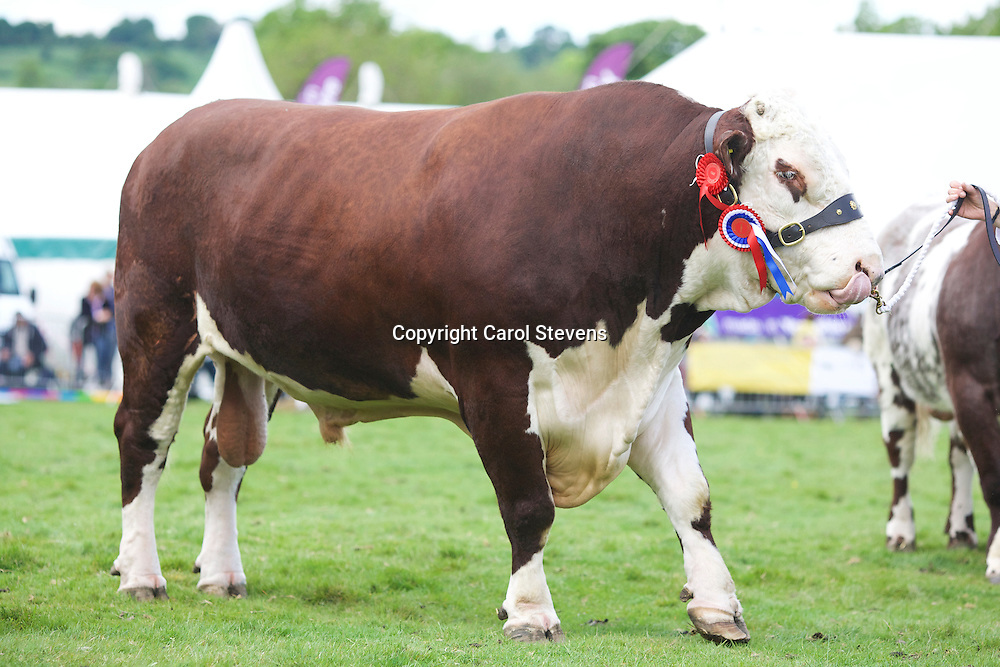 Otley Show 2016  Cattle Parade
