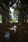'Iolani Palace. Kids playing under a banyan tree said to have been planted by Queen Kapi'olani.