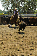 Cowgirl riding quarter horse in cutting horse competition
