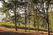 Archery Summit's Johnson Estate, Dundee Hills, Willamette Valley, Oregon