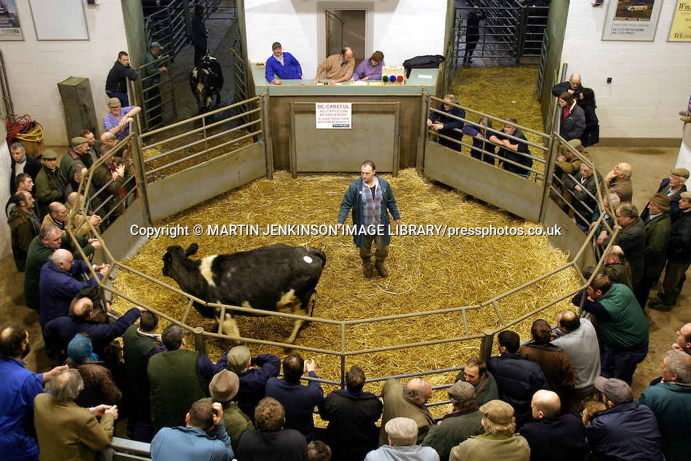 Cattle auction at Bakewell Agriculture Centre.