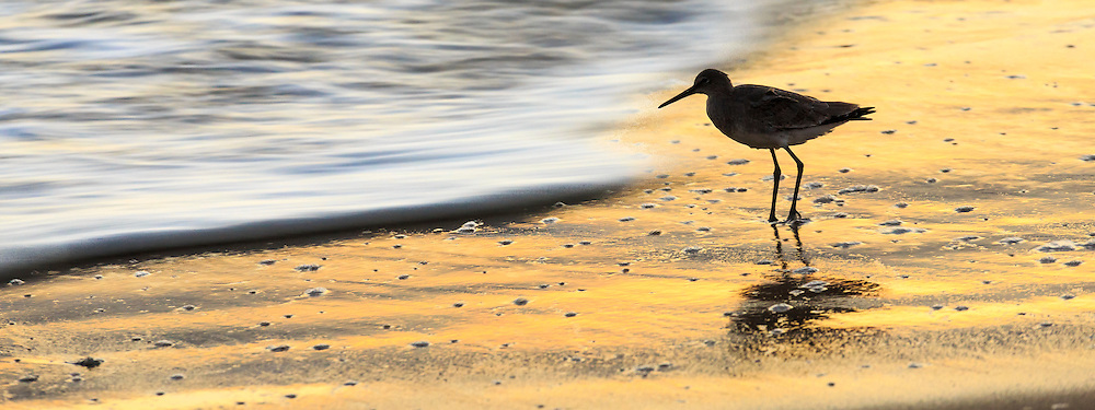 Loan Willet stand still against a moving wave at sunrise on Nags Head beach.