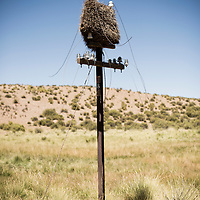 A derelict railway telegraph pole becomes nesting site. Jujuy, Argentina.