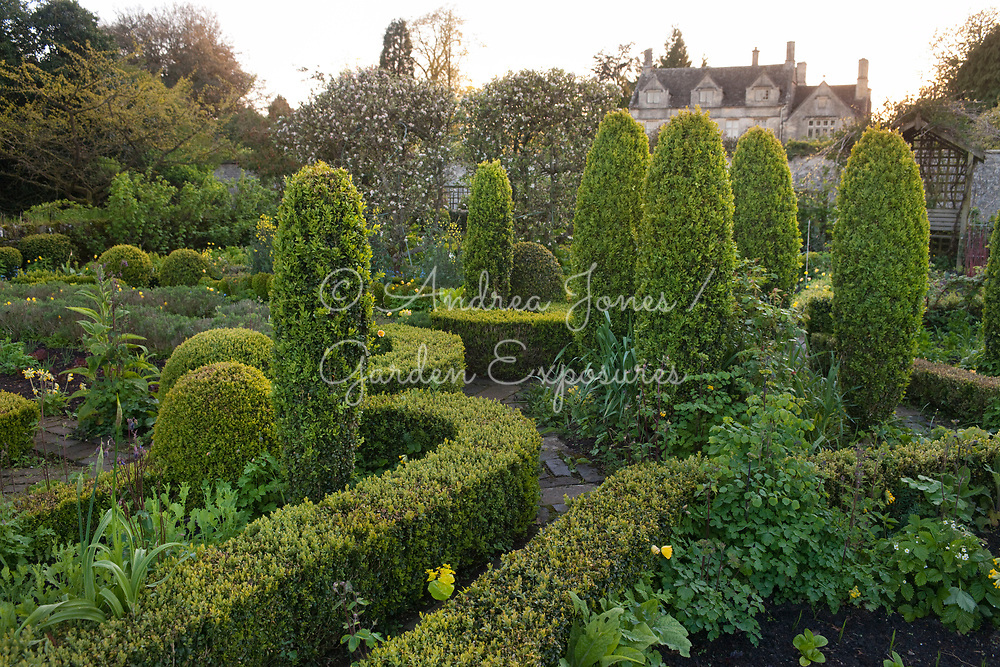The Potager Garden at Barnsley House with box hedges and topiary (Buxus sempervirens), brick paths, spring cottage garden plants including columbine, rue, foxgloves, cowslips, welsh poppies and espalier 'Goblet' trained apple trees in blossom