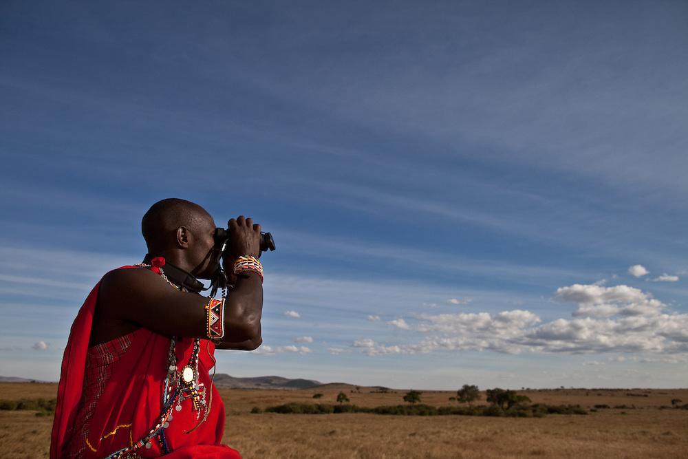 A maasai warrior scans the horizon in the Maasai Mara of Kenya