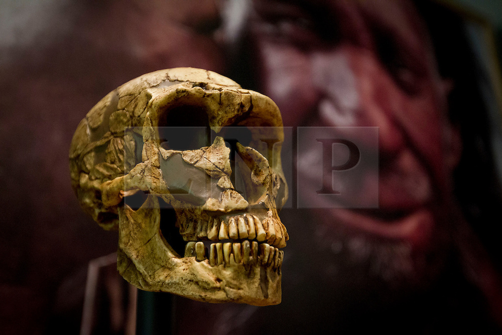 © Licensed to London News Pictures. 05/02/2013. London, UK. A Neanderthal skull is seen at the press view for 'Extinction: Not the End of the World' in the Natural History Museum in London today (05/02/13). The exhibition, open to the public on the 8th of February 2013, brings together more than 80 museum specimens to guide visitors on a journey through the death and destruction of species, demonstrating the crucial role that extinction plays in the evolution of life. Photo credit: Matt Cetti-Roberts/LNP