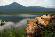 A beaver stump in foreground of a beaver pond in Alaska's Brooks Range.