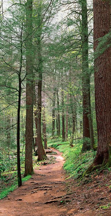 Woodland Path, Grotto Falls Trail