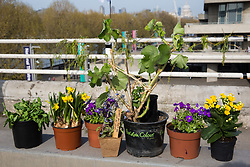 London, UK. 15th April 2019. Climate campaigners from Extinction Rebellion block Waterloo bridge to create a Garden Site during the first day of 'International Rebellion UK - Shut Down London!' events to call on the Government to take urgent action to address climate change.lamy Live News
