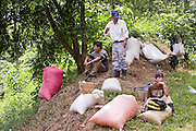 10 NOVEMBER 2004 -- TAPACHULA, CHIAPAS, MEX: Workers on a coffee plantation near Tapachula, Mexico, take a break during the harvest. Many coffee plantations in Chiapas rely on undocumented workers from Guatemala because their Mexican workers have either emigrated to the US or won't work for the wages plantation owners pay. The mountains of Chiapas, Mexico, make up some of the finest coffee producing land in Mexico. World coffee prices have been depressed by over production in Brazil and Vietnam and thousands of coffee farmers in Mexico and Guatemala have been forced to emigrate to the US as undocumented workers because of the crisis in the coffee industry. PHOTO BY JACK KURTZ