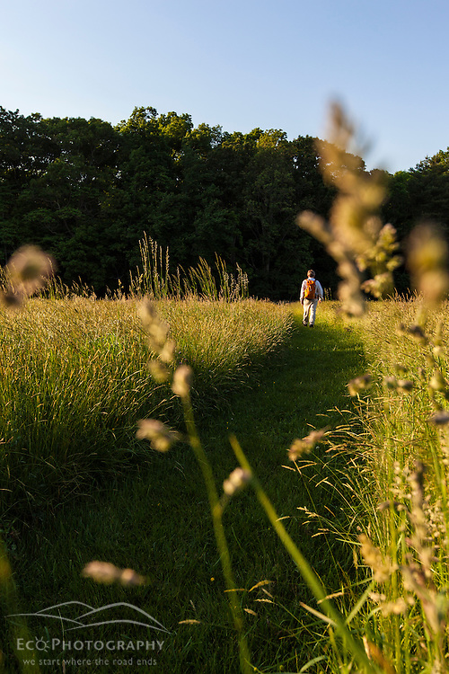 A man walks through the hay field at Phillips Farm in Marshfield, Massachusetts.
