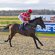 Lingfield 9th December 2012