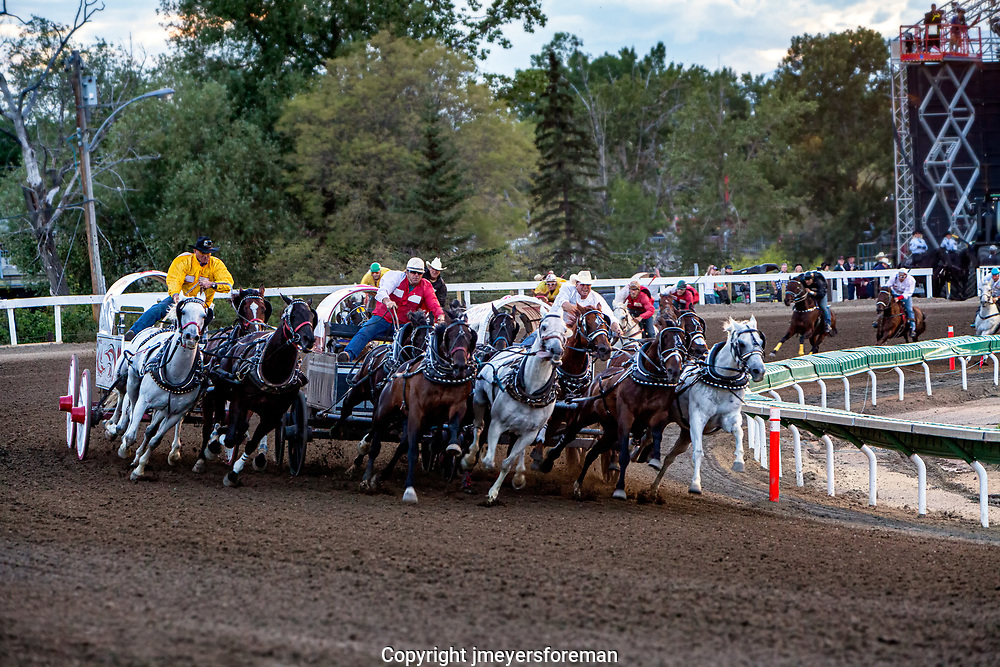 Calgary Stampede chuckwagon races, they round the first corner, three wide, and in a hurray