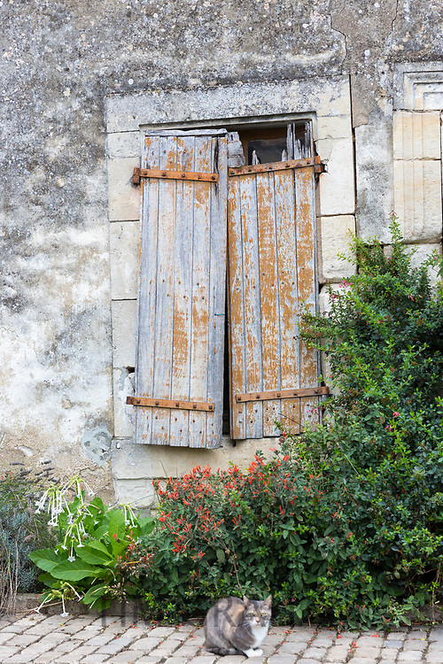 Cat by ancient architecture house with shutters in Coulon in the Marais Poitrevin region a Grand Site de France