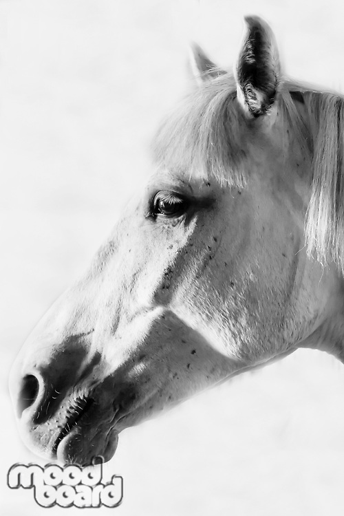 Black and white photo of horse on barn