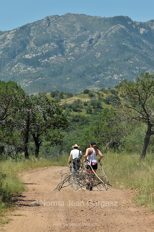 Campers gather firewood in the Santa Rita Mountains, Coronado National Forest, Sonoran Desert, Sonoita, Arizona, USA.