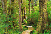 Boardwalk in coastal temperate rain forest<br /> <br /> Carmanah-Walbran Provincial Park<br /> British Columbia<br /> Canada